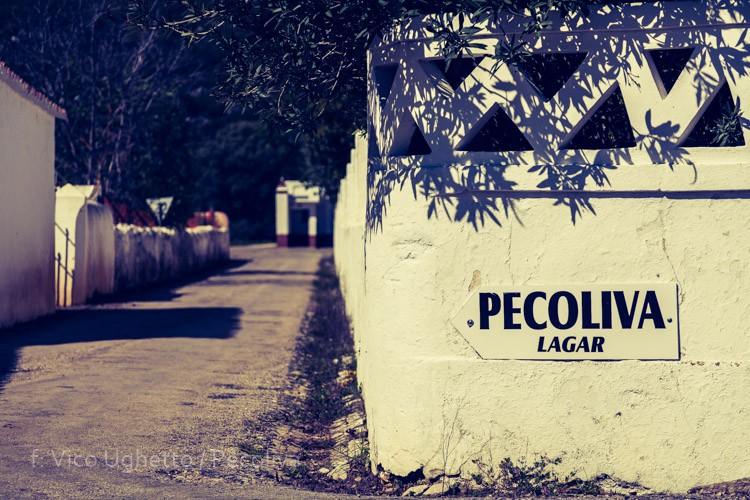 Historial da Pecoliva